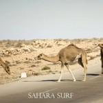 Sahara_Jan_1_09  807