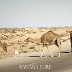 Sahara_Jan_1_09-807
